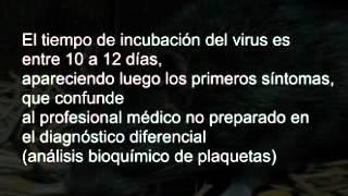Fiebre hemorragica argentina
