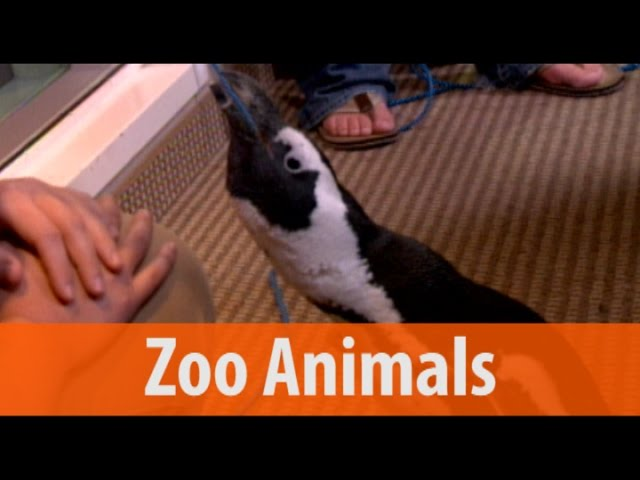 Zoo Animals - Penguin, Fennec Fox, Anteater and Hedgehog - Part 1 of 2