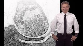 Erik Jorgensen (U. Utah / HHMI) 1: Synaptic transmission