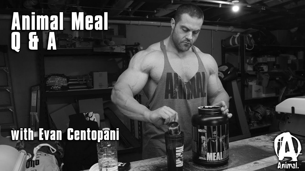 Animal Meal Q & A with Evan Centopani - The Official Animal Pak page 2018-10-02 14:24