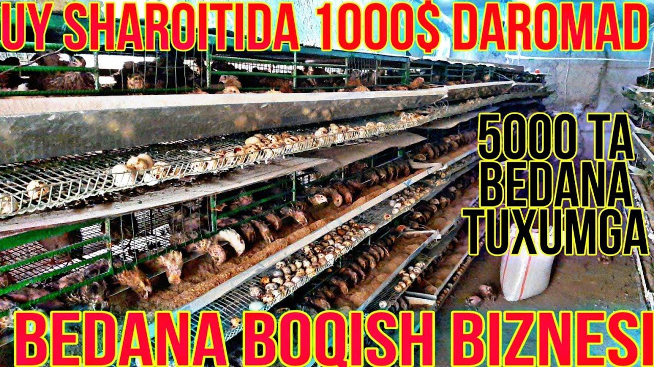 UY SHAROITIDA OYIGA 1000$ DAROMAD BEDANA  BOQISH BIZNESI TOLIQ MALUMOT MyTub.uz