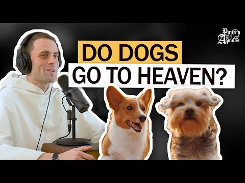 Catholic Theologian on Whether Dogs Go to Heaven W/ Fr. Gregory Pine
