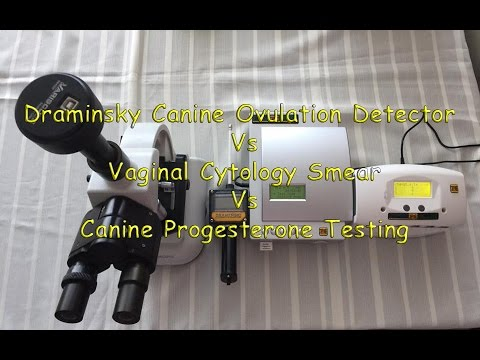 Video 1 Comparing Draminsky Dog Ovulation detector-Vaginal Cytology- Canine progesterone test