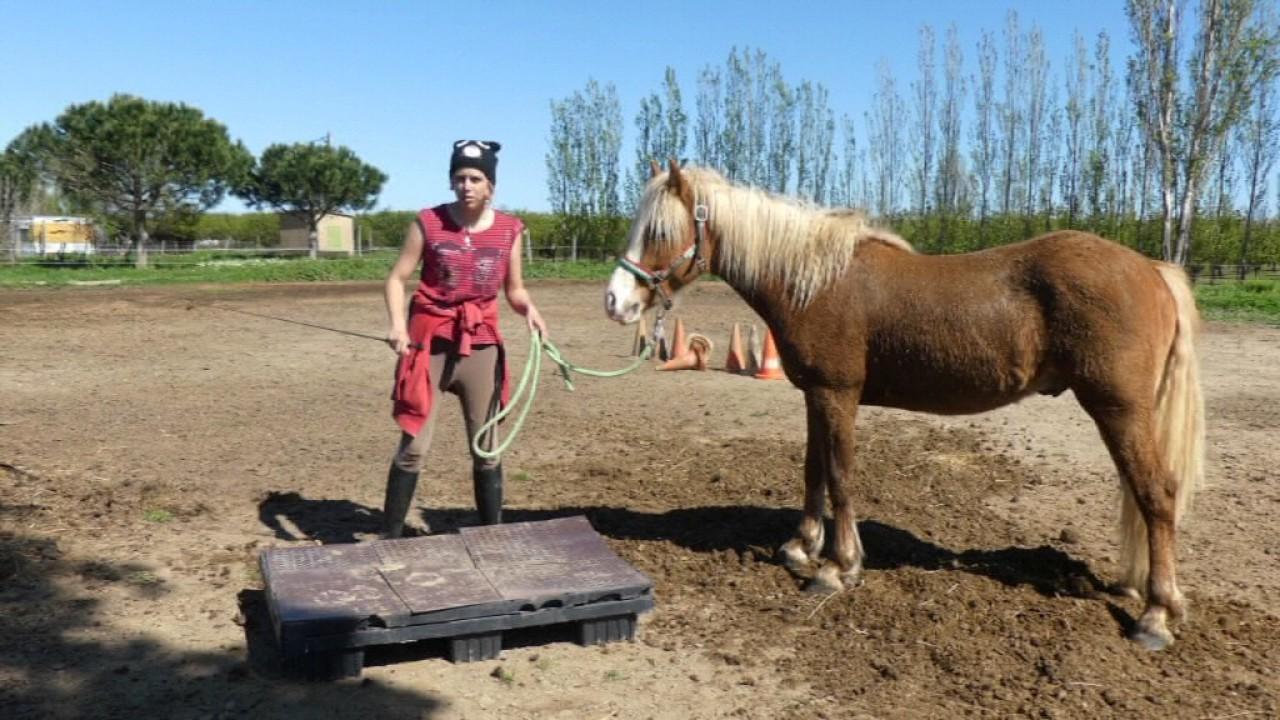tuto 2 apprendre a son poney cheval a monter sur un promontoire youtube. Black Bedroom Furniture Sets. Home Design Ideas