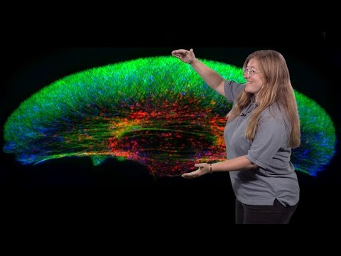 Julie Theriot (Stanford, HHMI) 2: Mechanics and Dynamics of Rapid Cell Motility