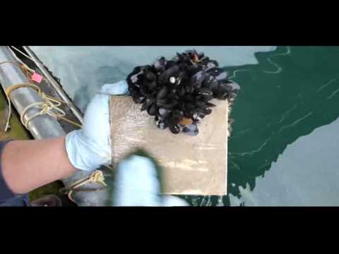 AquaNatural Marine Coating - Fibreglass cleaning after 180 Days