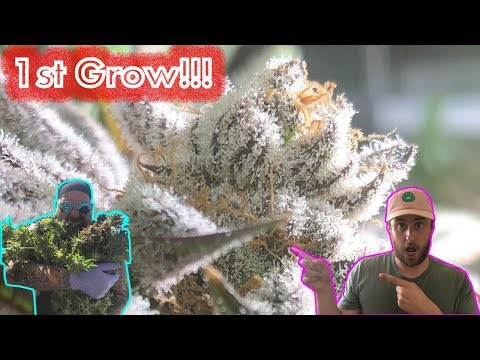 1st Time Cannabis Grower reviewing their First Harvest with GreenBox Grown