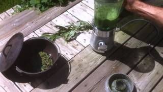 Quick & EASY Propagating- D.I.Y Rooting Hormone- Natural & Organic