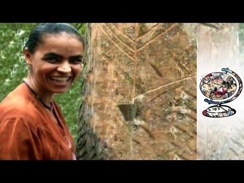 Can Marina Silva Save the Amazon Rainforest? (2010)