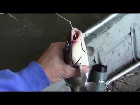 Catching Catfish With yo-Yo's