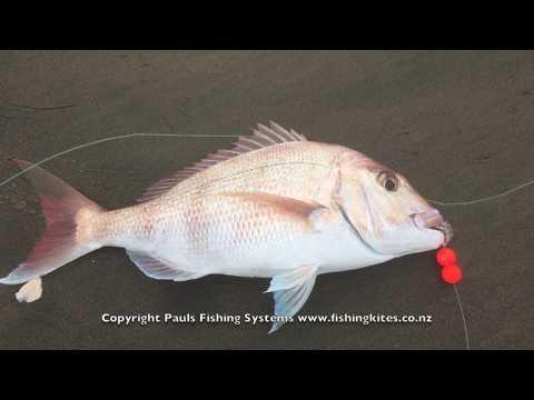 Kite Fishing Muriwai Beach - Shore Based Longline Fishing