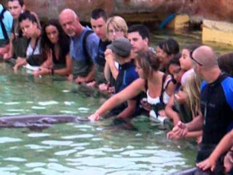 Rencontre avec dauphins marineland avis