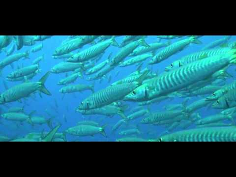 Barracuda Documentary