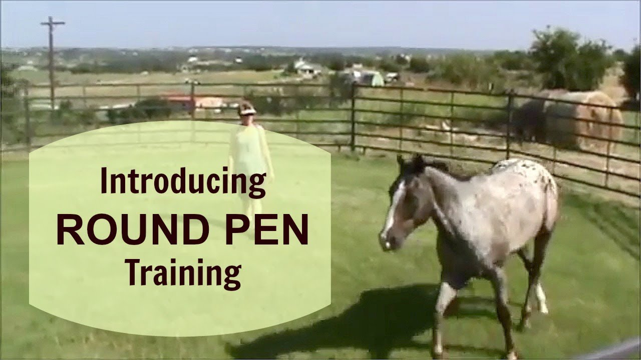 Watch How to Round Pen a Horse video