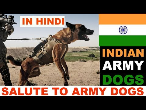 Indian Army Dogs In Hindi : Happy Republic Day : The Ultimate Channel