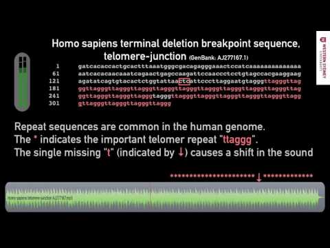 What does DNA sound like? 03 Repetitive Telomer