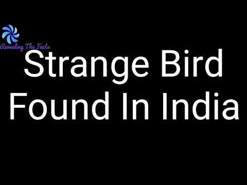 STRANGE BIRD FOUND IN INDIA  STRANGE BIRD ?