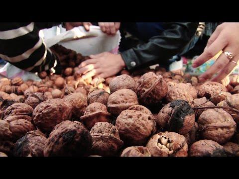 Kyrgyzstan: Walnuts Boost Farmers' Income
