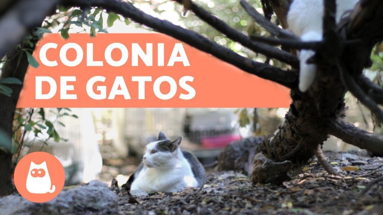 Cómo Ayudar A Los Gatos Callejeros Alimentación Casetas Desparasitación