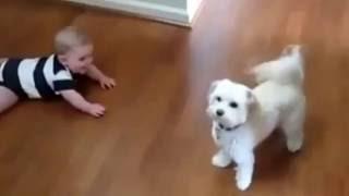 #Смешное видео! Собака Клоун! Так веселить ребенка!!!#