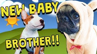 GUPPY MEETS HIS BABY BROTHER!!
