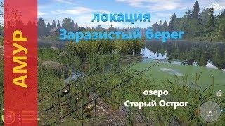 Російська рибалка 4 - озеро Старий Острог - Амур на линевой точці