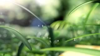 Garden  Video ringtone