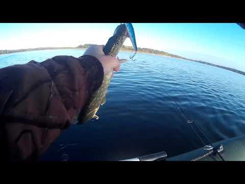 Две поклевки. Две Щуки. Рыбалка на озере.
