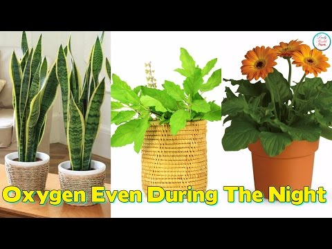9 Plants Which Give Out Oxygen Even During The Night