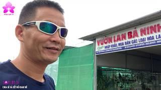 Khám Phá Vườn Lan Bá Ninh - Nhà Nhập Khẩu Lan Hàng Đầu Việt Nam