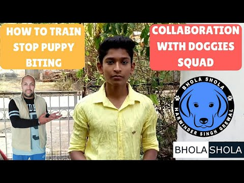 Pet Care - How To Train Stop Play Biting For Dog - Collaboration with Doggies Squad - Bhola Shola