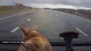 г.Мамадыш . Спас котенка