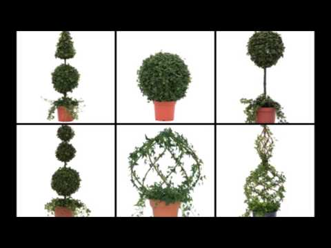 How to Care for a Live Topiary Plant