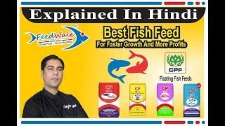 सबसे अच्छी Fish Feed तेजी से विकास और अधिक मुनाफे के लिए । CPF Floating Fish Feed - FeedWale - CP