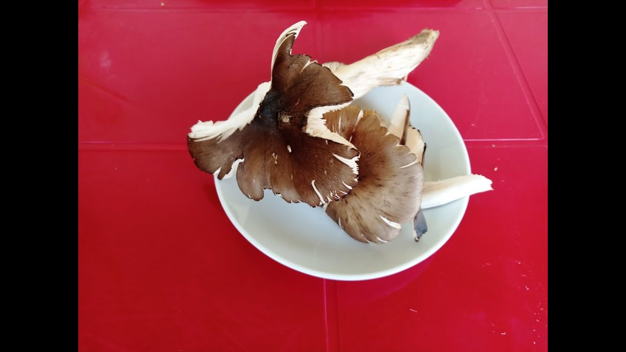 HOW TO COOK MUSHROOM SAUCE: COMMENT CUIRE LES CHAMPIGNONS ...