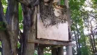 How To Build A Tree Fort For $7- Simple & Easy