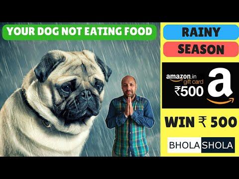 Pet Care - Rainy Season Your Dog Not Eating Food - Bhola Shola