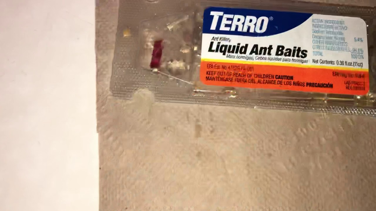 Terro Ant Bait Peanut Butter D Ead Ants Best Ant Bait Ever