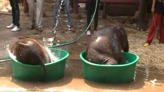 ช้างน้อยเล่นน้ำ