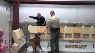 Davis County Sheriff K-9 Nitro Training on Cocaine 2