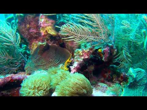 Mergulho Em San Andres Colômbia - HD