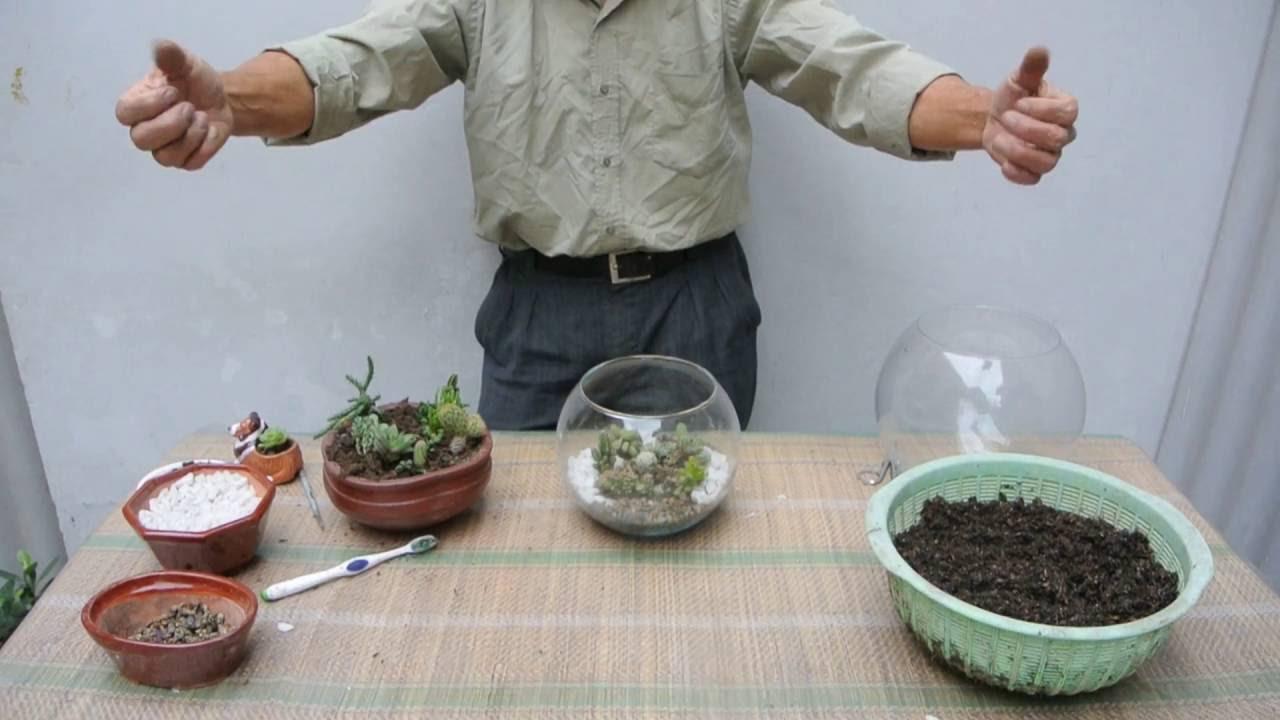Como sembrar cactus en un terrarium youtube for Como plantar cactus