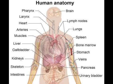 Human Anatomy and Physiology | Study Guide Course Learn Human Body ...