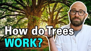 How Do Trees Get Water from the Ground Up to Their Leaves?