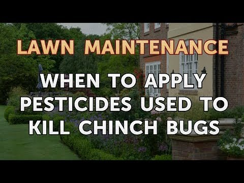 When To Apply Pesticides Used To Kill Chinch Bugs