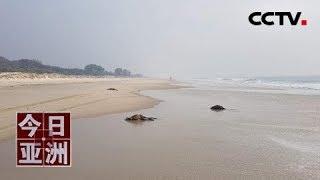 [今日亚洲]速览 伤心!横尸海滩 澳袋鼠为避山火跳海溺亡  CCTV中文国际