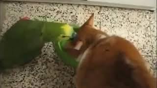 Мой попугай и кошка сестры
