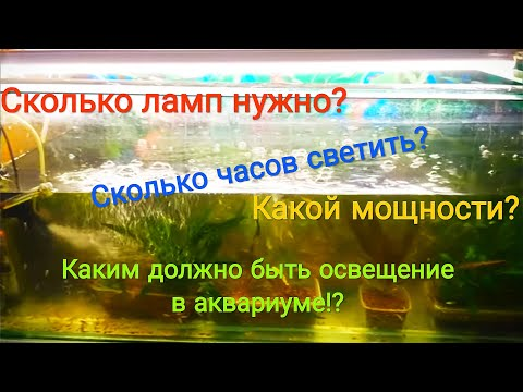 Вопрос: Как влияет освещение на сон рыб?