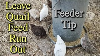 Why I Leave Quail Run Out of Feed TIP?