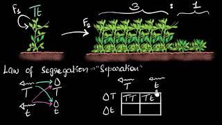 Dominance & segregation laws | Heredity & Evolution | Biology | Khan Academy